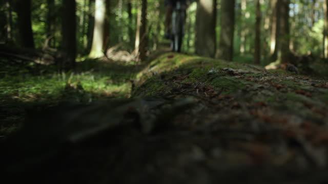MS Male biker mountain biking through forest / Squamish, British Columbia, Canada