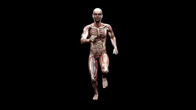 male body running - 生理学点の映像素材/bロール