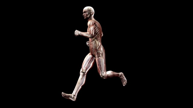 male body running - human large intestine stock videos & royalty-free footage