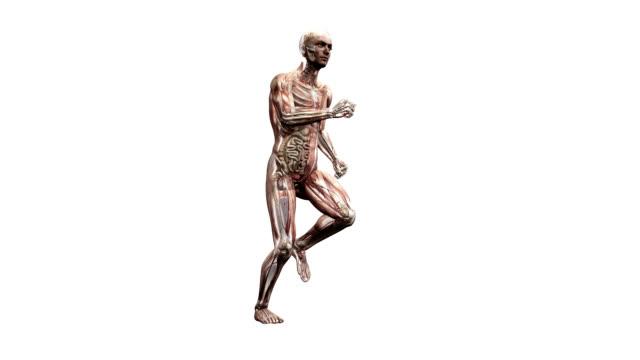 male body running - intestino crasso umano video stock e b–roll