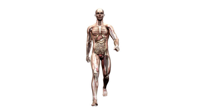 Male body walking