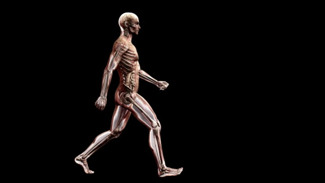 male body walking - human muscle stock videos & royalty-free footage
