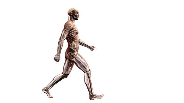 male body walking - human large intestine stock videos & royalty-free footage