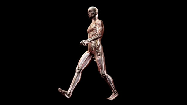 vídeos de stock e filmes b-roll de male body walking - anatomia