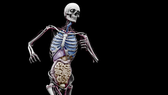 """male body with organs, running"" - human large intestine stock videos & royalty-free footage"