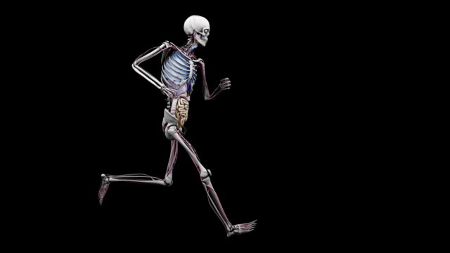 """""""male body with organs, running"""" - human skeleton stock videos and b-roll footage"""
