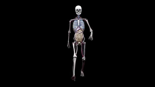 """male body with organs, walking"" - biomedical illustration video stock e b–roll"