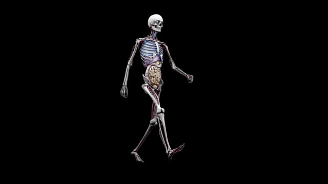 """male body with organs, walking"" - human large intestine stock videos & royalty-free footage"