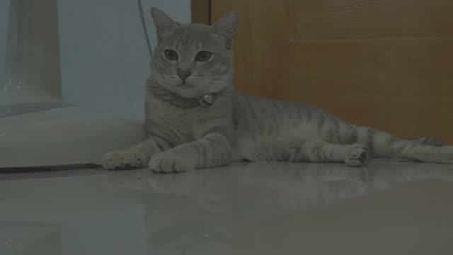 猫白川郷(4k)雄 - 雑種のネコ点の映像素材/bロール