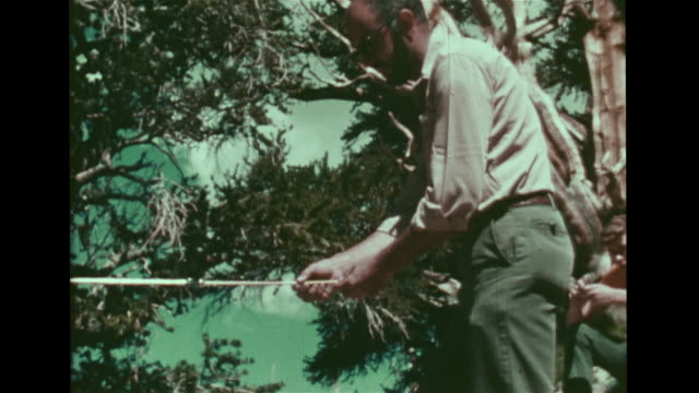 male dendrochronologist standing next to tree & writing in notebook, vs male scientist removing core sample from ancient bristlecone pine tree. light... - 国有林点の映像素材/bロール