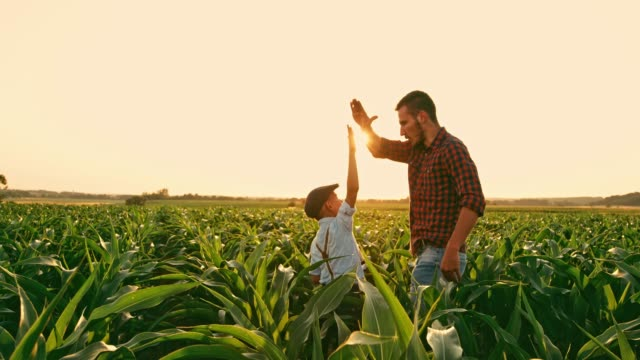 vídeos de stock e filmes b-roll de male farmer and son talking and high-fiving in sunny,idyllic rural corn field,real time - agricultor