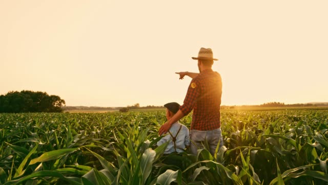 vídeos de stock e filmes b-roll de male farmer and son talking and high-fiving in sunny,idyllic rural corn field,real time - família com um filho