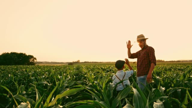 vídeos de stock e filmes b-roll de male farmer and son with digital tablet talking and high-fiving in sunny,idyllic rural corn field,real time - orgânico