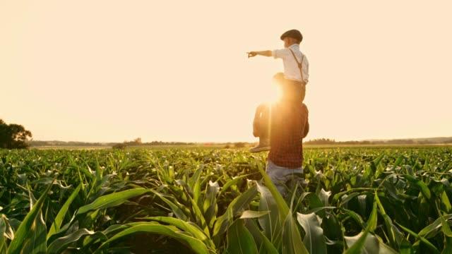 vídeos y material grabado en eventos de stock de hombre agricultor lleva el hijo en hombros en campo del maíz rural idílico, soleado, tiempo real - bienestar