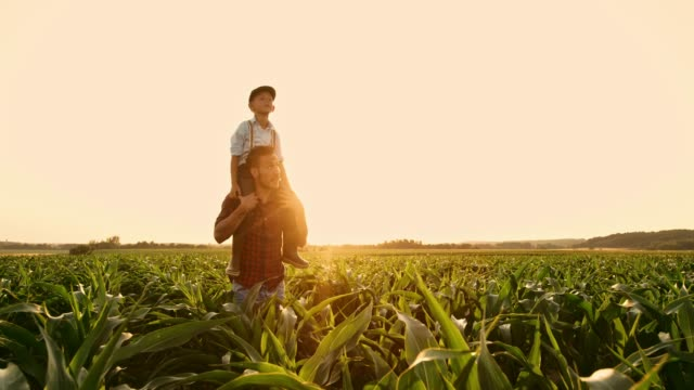 Male farmer carrying son on shoulders in sunny,idyllic rural corn field,real time
