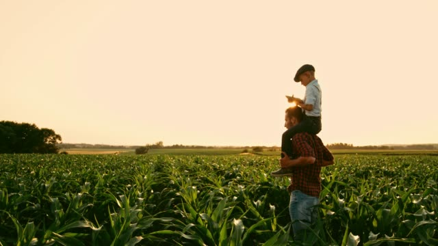 vídeos de stock e filmes b-roll de male farmer carrying son on shoulders in sunny,idyllic rural corn field,real time - família com um filho