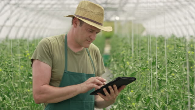 male farmer checking tomatoes and using a digital tablet - organic farm stock videos & royalty-free footage
