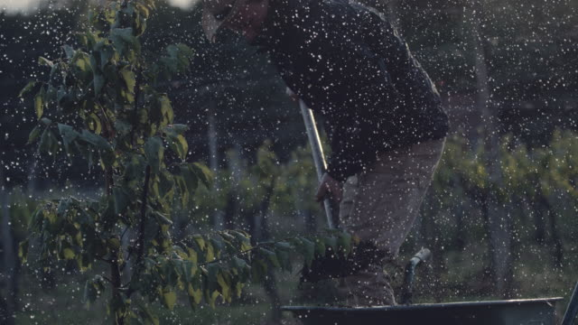 stockvideo's en b-roll-footage met ms mannelijke landbouwer die fruitboom in regenachtige boomgaard plant - nat