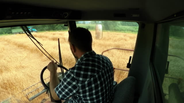 ld male farmer riding a combine and harvesting wheat - tractor stock videos & royalty-free footage