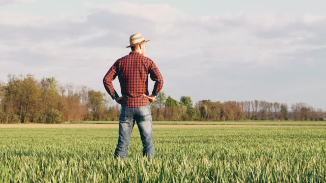 male farmer standing with hands on hips in sunny,idyllic rural green wheat field,slow motion - top garment stock videos & royalty-free footage