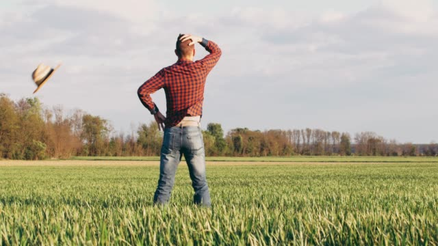 Male farmer standing with hands on hips in sunny,idyllic rural green wheat field,slow motion