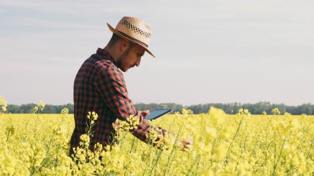 vídeos y material grabado en eventos de stock de hombre agricultor con tableta digital campo de colza amarilla rural idílico, soleado, tiempo real - camisa a cuadros