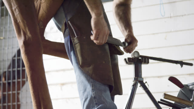 a male farrier in his thirties uses a hoof rasp to file down a brown horse's hoof in a barn on a farm - ferro di cavallo accessorio per animali video stock e b–roll