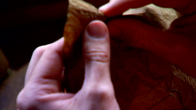 cu male fingers tearing vein from tobacco leaf laying leaf on rolling table placing second leaf next to first as binder leaves handmade hand crafted... - leaf vein stock videos and b-roll footage