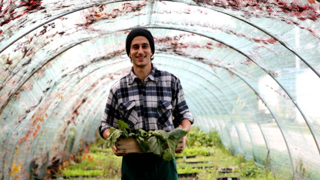 male garden worker with a vegetable box in greenhouse - standing stock videos & royalty-free footage
