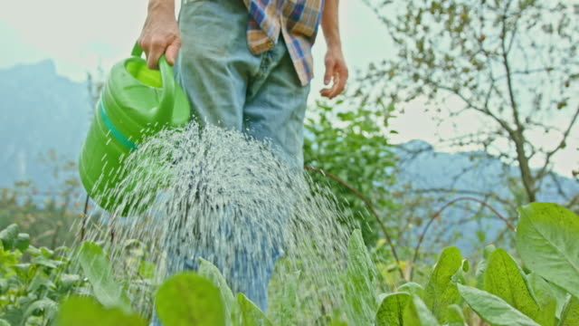 slo mo male gardener holding a watering can and watering his permaculture garden - watering can stock videos & royalty-free footage