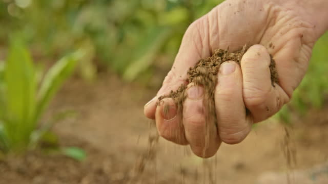 male hand grabbing garden soil to check the quality - organic stock videos & royalty-free footage
