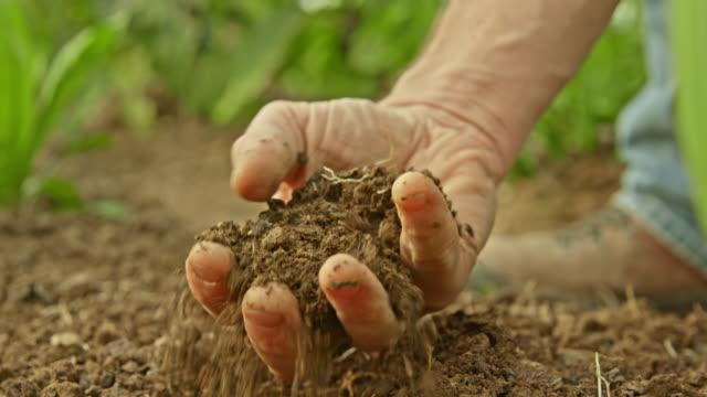 vídeos y material grabado en eventos de stock de slo mo macho agarrar a mano tierra de jardín para comprobar la calidad - campesino
