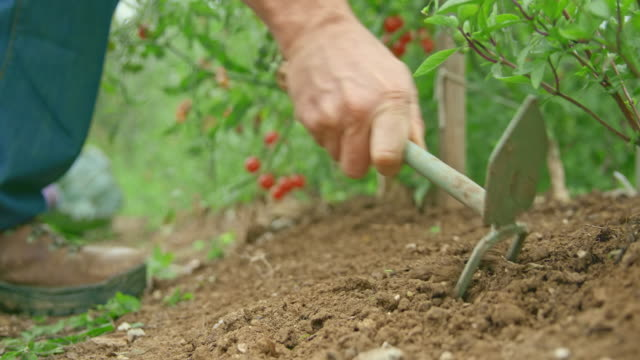 male hand holding a hand fork and mattock for weeding the garden - garden fork stock videos & royalty-free footage