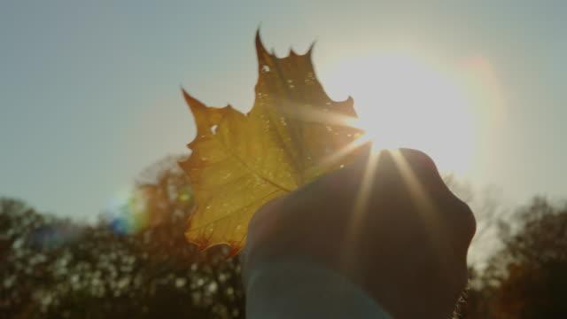 vídeos y material grabado en eventos de stock de punto de vista masculino mano agarrando otoño con hojas en el sol - mancha solar