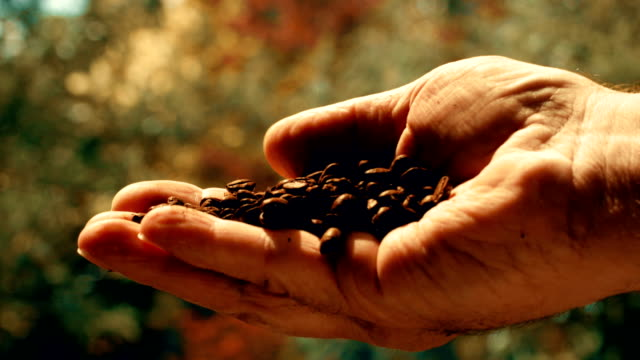 Male hand holding roasted coffee beans.