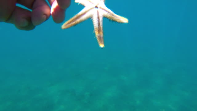 vídeos de stock, filmes e b-roll de estrela de exploração de mão masculino - estrela do mar