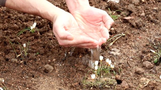 Männliche Hand Pflanze gießen