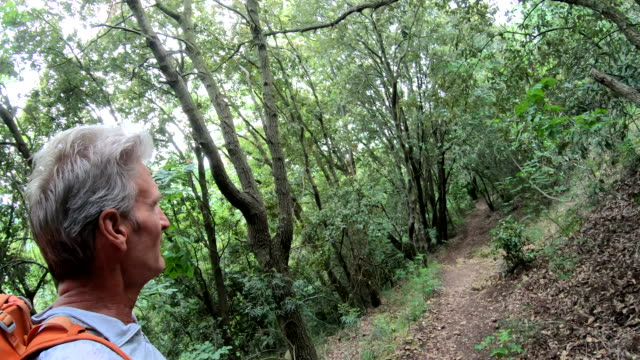 male hiker ascends trail through deciduous hardwood forest - hardwood stock videos & royalty-free footage