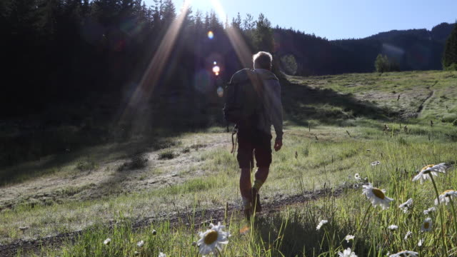 male hiker follows meadow path, at sunrise - ascentxmedia stock videos & royalty-free footage