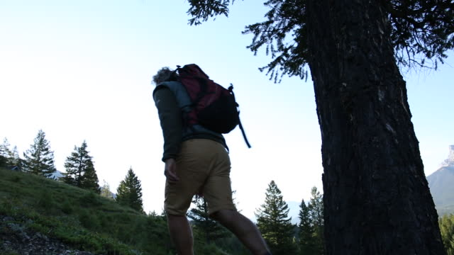 Male hiker pauses by tree, then continues upwards hike