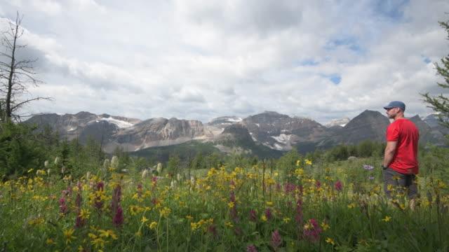 Male hiker walks along trail, past alpine wildflowers
