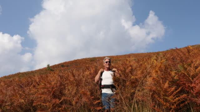 male hiker walks through fern forest in alpine - t shirt stock videos & royalty-free footage