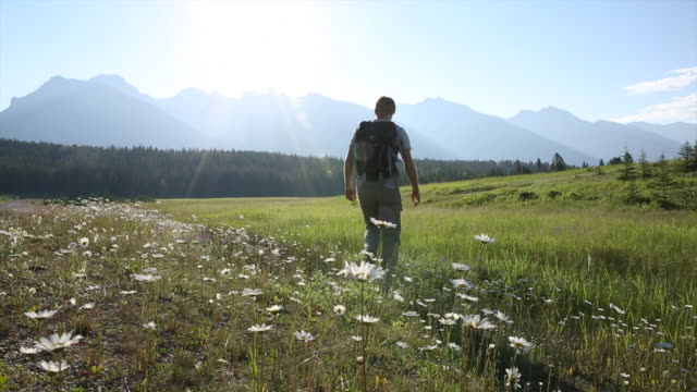 male hiker walks through meadow at sunrise - wildflower stock videos & royalty-free footage