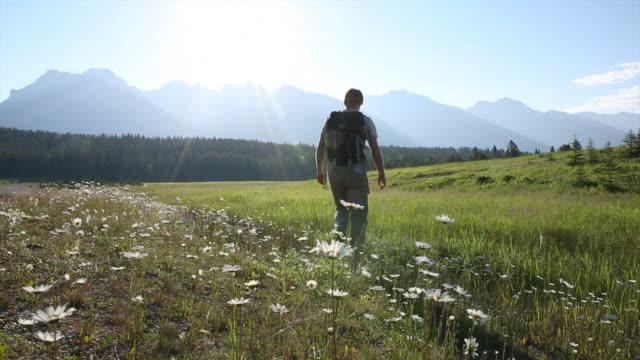 vidéos et rushes de randonneur mâle promenades à travers la prairie au lever du soleil - fleur sauvage