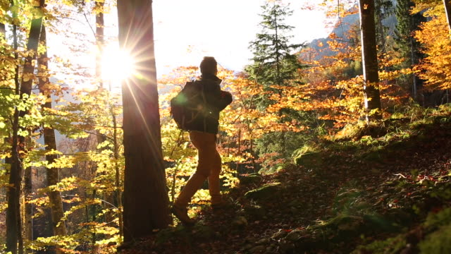 Male hiker walks through mountain forest, in autumn