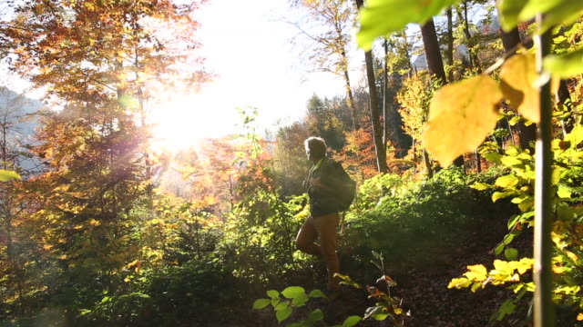 male hiker walks through mountain forest, in autumn - woodland stock videos & royalty-free footage