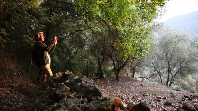 Male hiker walks through olive grove, forest, sunrise