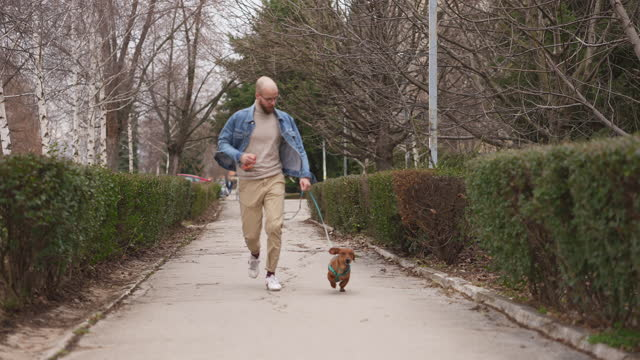 male hipster running with his brown small dachshund dog on a pet leash - pet leash stock videos & royalty-free footage