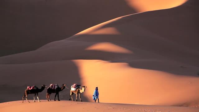 Male in Touareg robes leading camels Erg Chebbi, Sahara Desert, Morocco, Africa