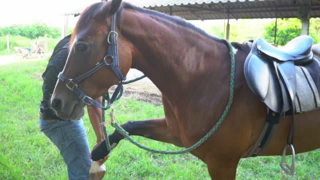 vídeos de stock, filmes e b-roll de masculino médico examinando um cavalo e um cavalo abraço - acariciando